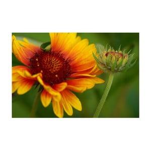 Fotoobraz Slunečnice, 40x60 cm, exkluzivní edice