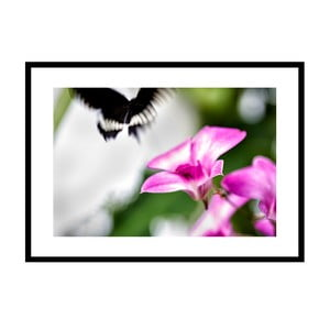 Pomíjivost, autorská fotografie Borise Stojanova (černý rám)