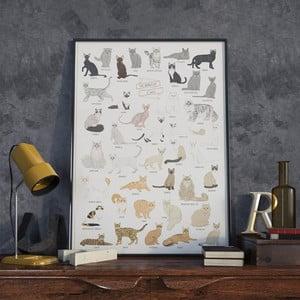 Plakát Follygraph The World of Cats, 42x59,4 cm