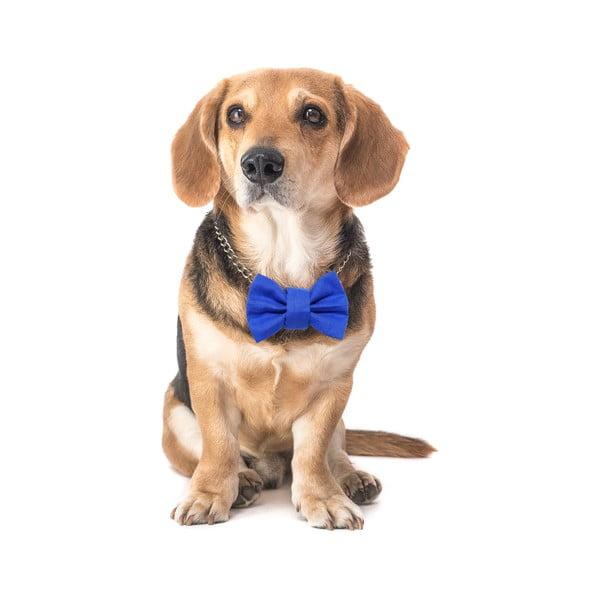 Modrý charitativní psí motýlek Funky Dog Bow Ties, vel. L