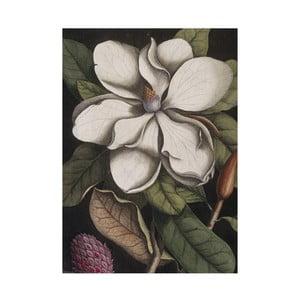 Prosop de bucătărie Jay Biologica Magnolia