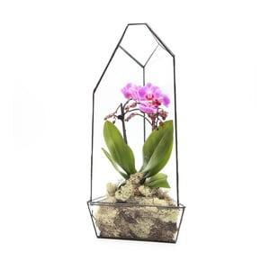 Terárium s rostlinami Urban Botanist Super Aztec Orchid House, tmavý rám