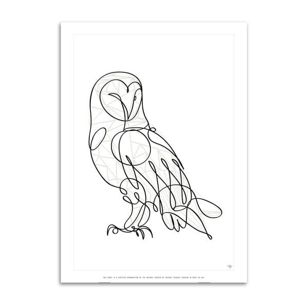 Plakát Barn Owl