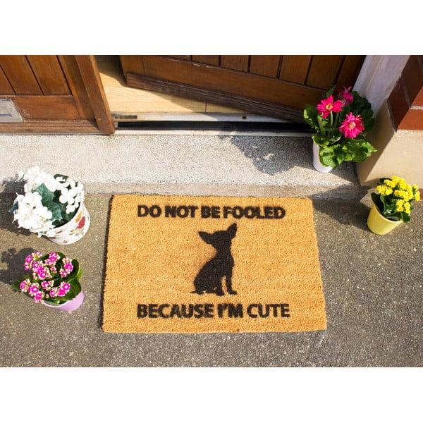 Rohožka Artsy Doormats Chihuahua,40x60cm