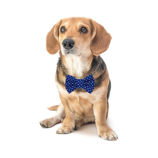 Modrý charitativní psí motýlek s malými puntíky Funky Dog Bow Ties, vel. S