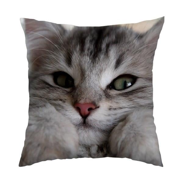 Polštář Cute Cat, 40x40 cm