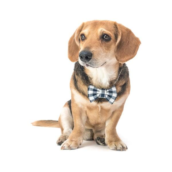 Modrý károvaný charitativní psí motýlek Funky Dog Bow Ties, vel. M