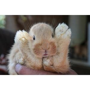 Roztomilý králíček