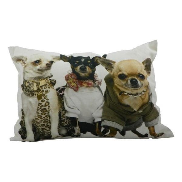 Pernă Chihuahuas 35x50 cm