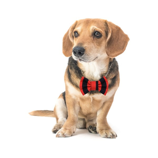 Červeno-černý charitativní psí motýlek Funky Dog Bow Ties, vel. L