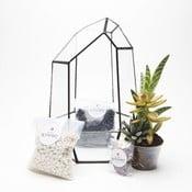 Terárium s rostlinami Urban Botanist Aztec Gem DIY, tmavý rám