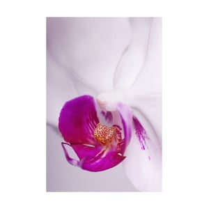 Fotoobraz Růžový květ, 40x60 cm, exkluzivní edice