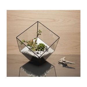 Terárium s rastlinami Urban Botanist Aztec Cube DIY, tmavý rám