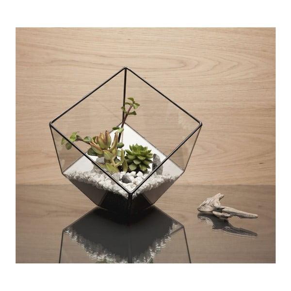 Terárium s rostlinami Urban Botanist Cube, tmavý rám