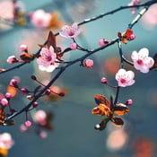 Skleněný obraz Beautiful Spring Day 30x30 cm
