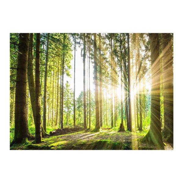 Velkoformátová tapeta Artgeist Forest Tales, 300x210cm