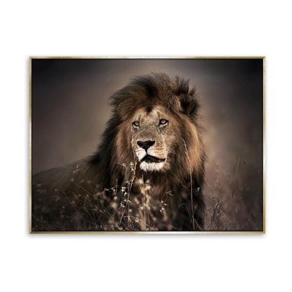 Obraz lwa na płótnie Styler Golden Lion, 62x82 cm