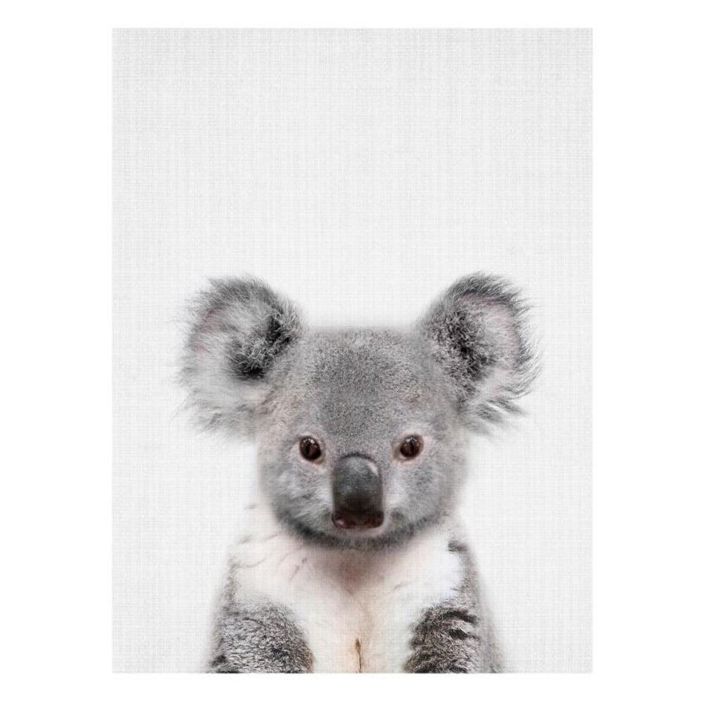 Plakát Blue-Shaker Baby Animals Koala, 30 x 40 cm
