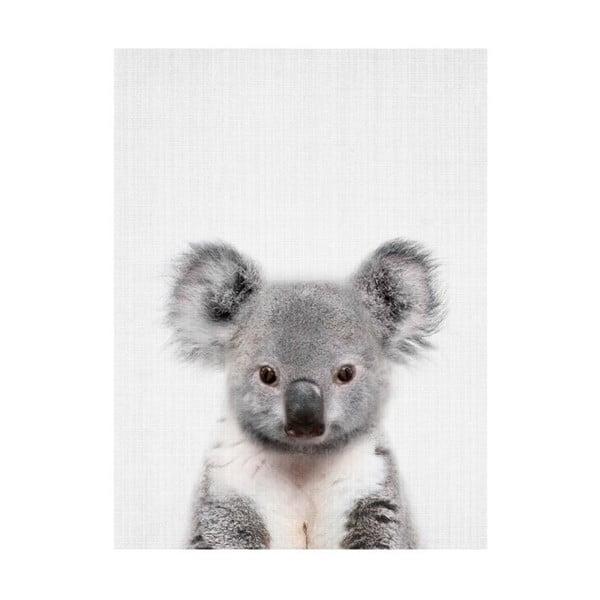 Baby Animals Koala poszter, 30 x 40 cm - Blue-Shaker