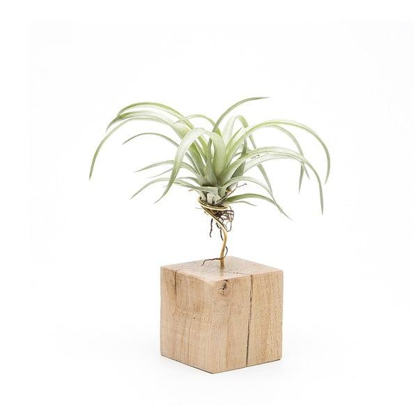 Dřevěný květináč Urban Botanist Air Plant Petite