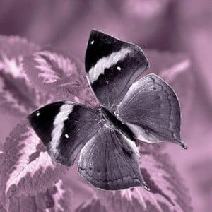 Obraz na skle Motýl II, 30x30 cm