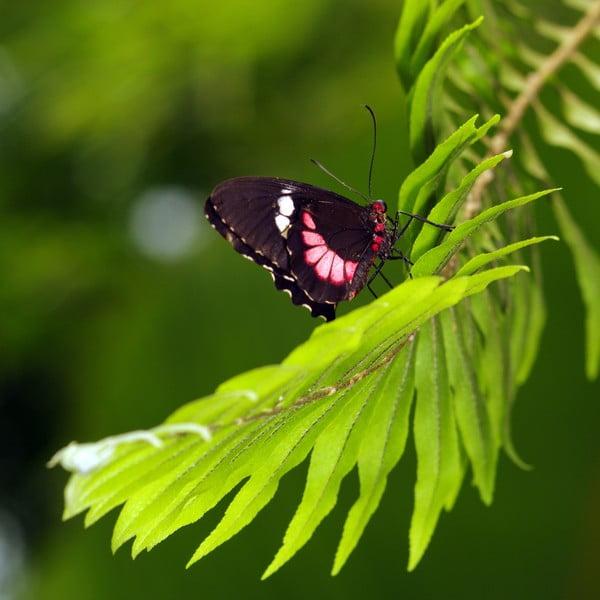 Set 4 fotoobrazů Motýli, exkluzivní edice