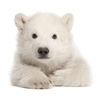 Autocolant pentru perete Dekornik Polar Bear 70 x 76 cm