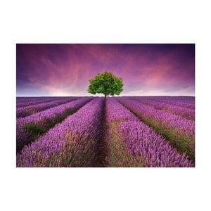 Vinylový koberec Lavender Field, 52x75 cm