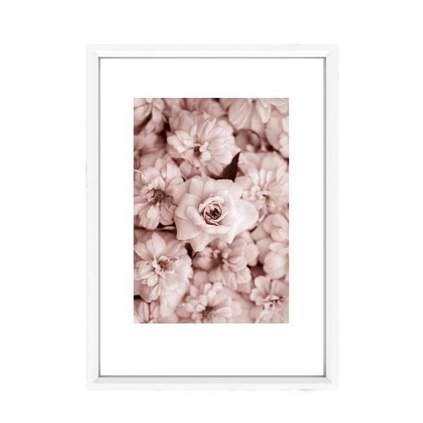Obraz Piacenza Art Roses In Rosé, 30x20 cm