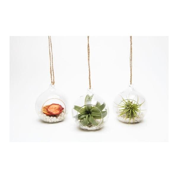 Závěsné terárium s rostlinami Urban Botanist Tillandsia