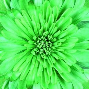 Obraz na skle Do zelena, 50x50 cm