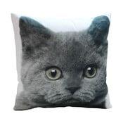 Polštář Grey Cat, 45x45 cm