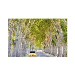 Fotoobraz Stromořadí