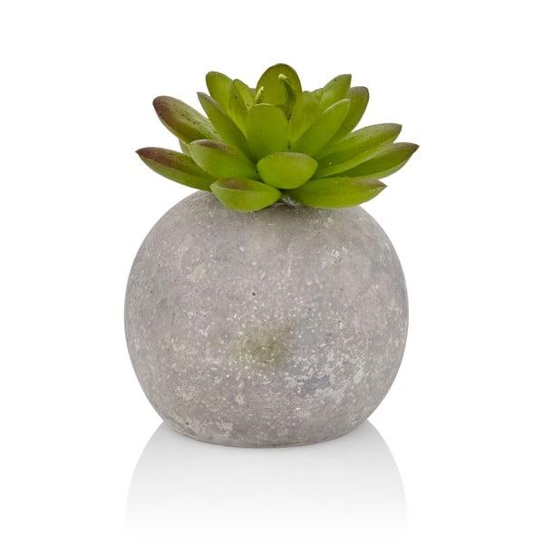 Succi szukkulens művirág beton kaspóban - The Mia