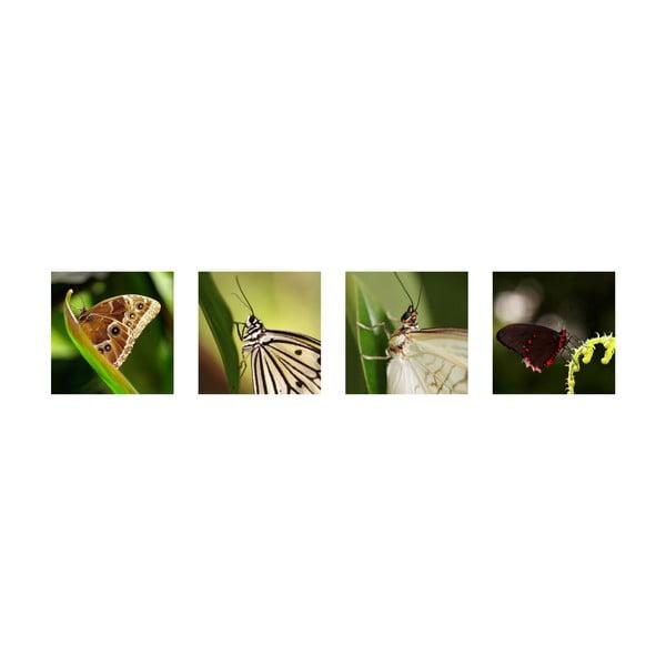 Set 4 fotoobrazů Motýlci, exkluzivní edice
