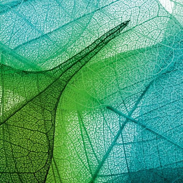 Obraz Krajka z listí, 60x60 cm