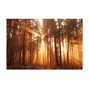 Fotoobraz Les v ranním slunci, 90x60 cm