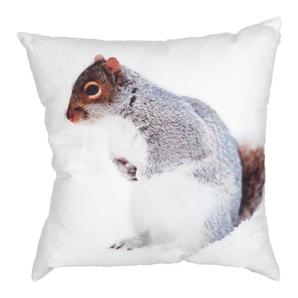 Polštář Squirrel White, 45x45 cm