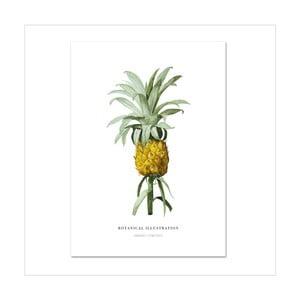 Plakát Leo La Douce Ananas Comosus, 21x29,7cm