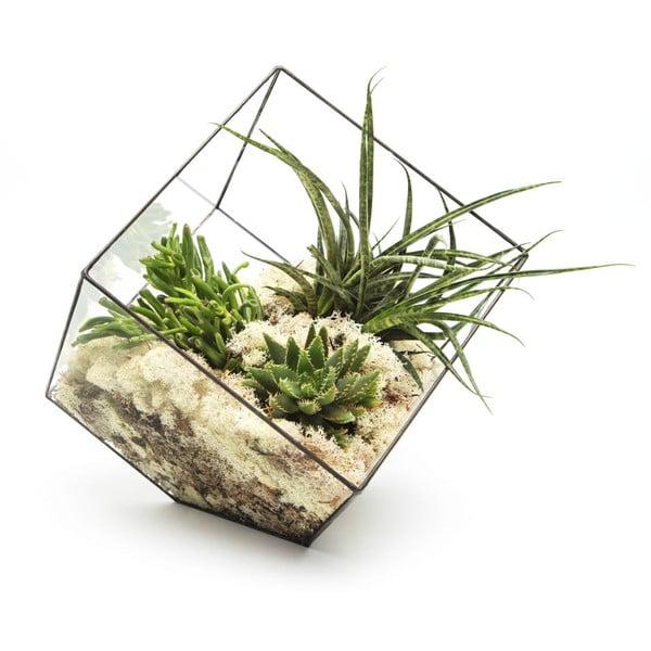 Terárium s rostlinami Urban Botanist Super Aztec Cube, tmavý rám
