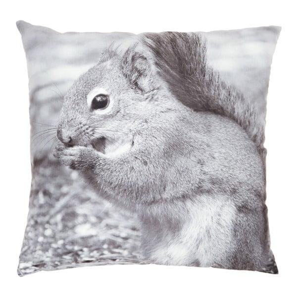 Polštář Squirrel, 45x45 cm