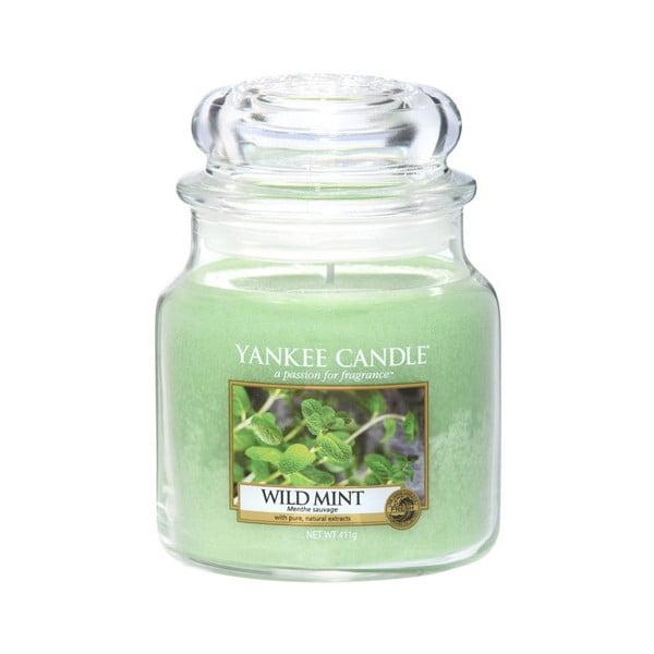 Vonná sviečka Yankee Candle Divoká Mäta, doba horenia 65 - 90 hodín