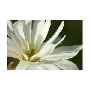 Fotoobraz Bílá, 40x60 cm, exkluzivní edice