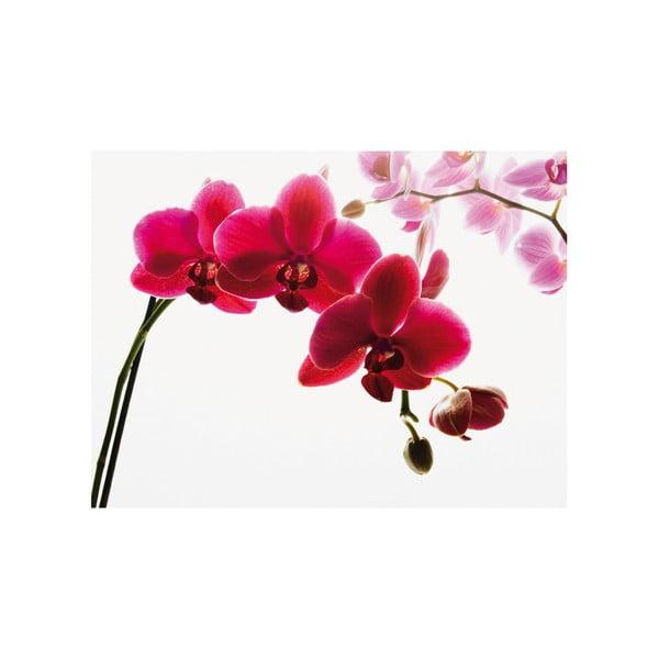 Velkoformátová tapeta Orchidej, 315x232 cm