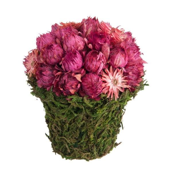Slaměnky v květináči z mechu Dried