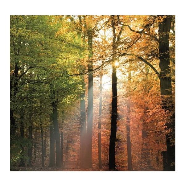 Tapeta Forest Lights, 300x280 cm