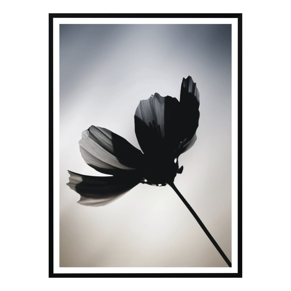 poster nord co flower 40 x 50 cm bonami. Black Bedroom Furniture Sets. Home Design Ideas