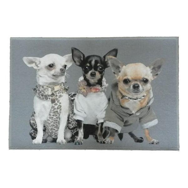Carpetă Chihuahuas 75x50 cm