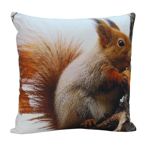 Polštář Squirrel Ted, 45x45 cm