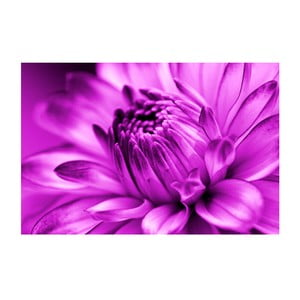 Obraz na skle Růžový květ, 40x60 cm